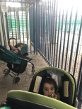 Filistia and my nephew waiting for about one hour in front of the disabled gate, which hasn't been opened in years, as claimed by the aggressive Israeli Occupied Force. You can imagine when babies are tied for that long how fussy they get.